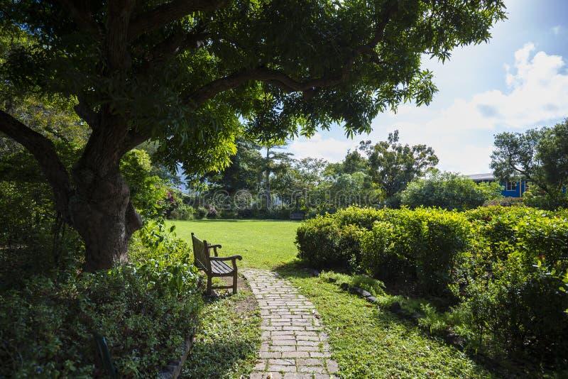 Eenzame bank in een botanische tuin Wegstad, Tortola royalty-vrije stock fotografie