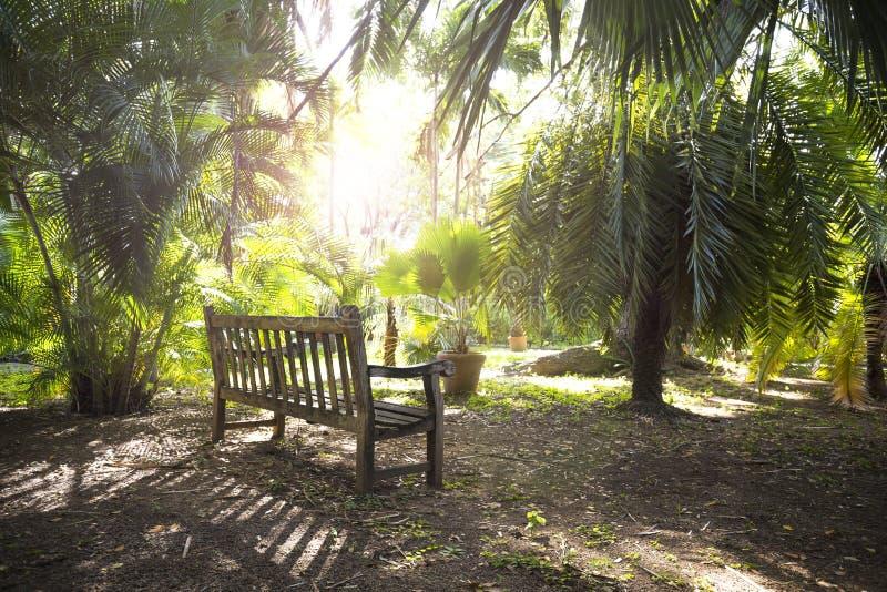 Eenzame bank in een tuin stock afbeelding