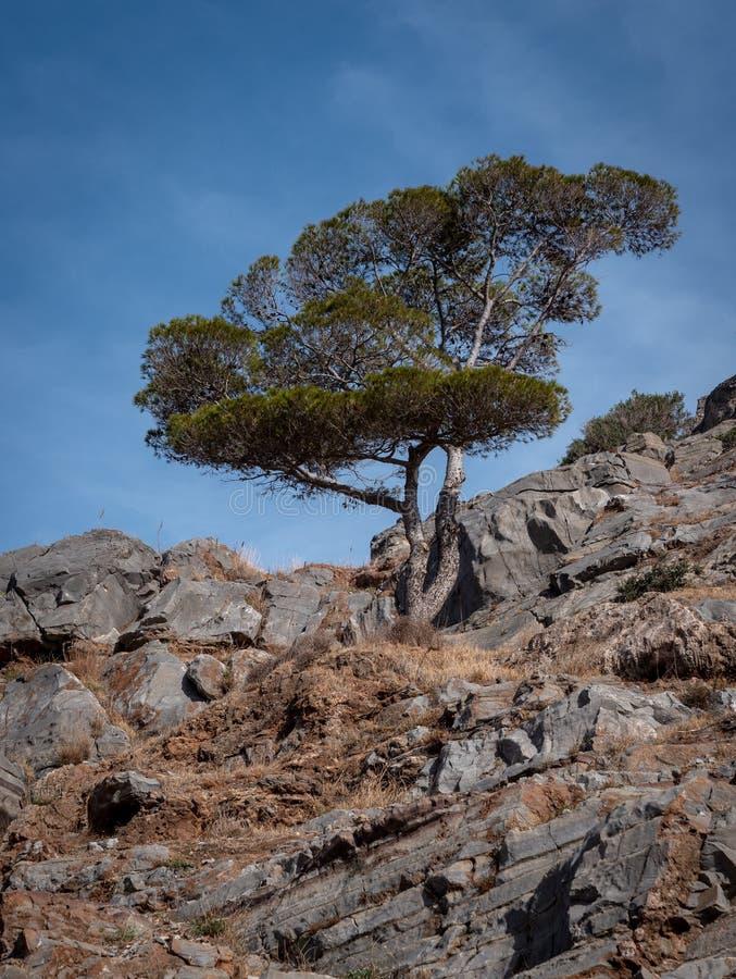 Eenzame bergboom stock foto's