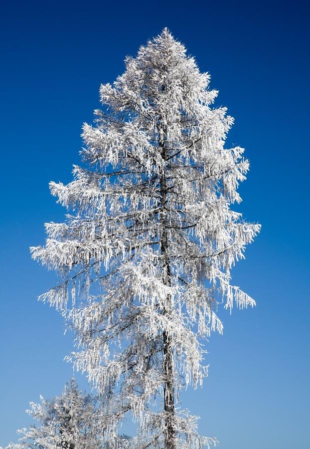Eenzame bevroren boom royalty-vrije stock afbeeldingen