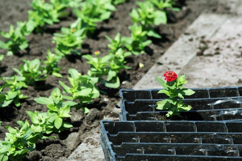 Eenzame bloem. stock afbeelding