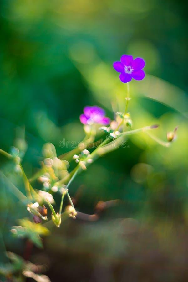Eenzame bloem stock afbeeldingen