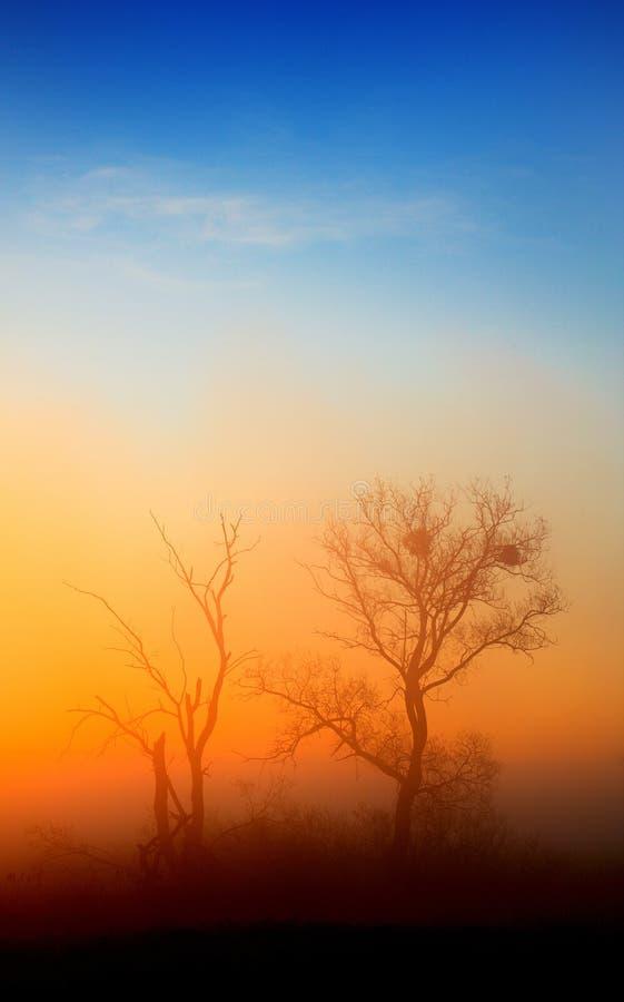 Eenzame bomen stock afbeelding