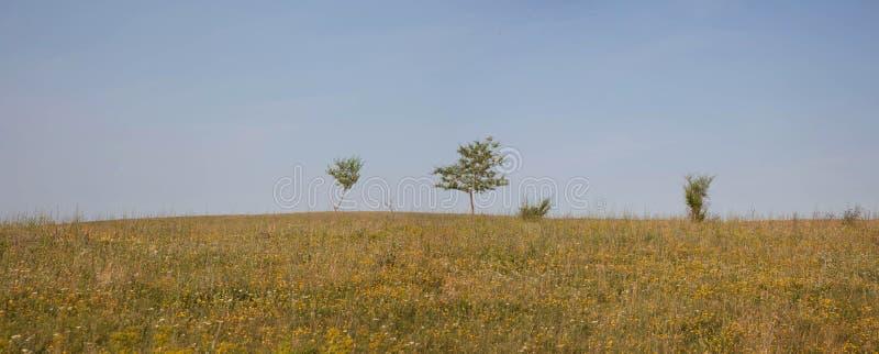 Eenzame bomen in de steppe stock foto's