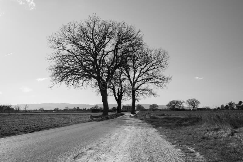 Eenzame bomen op de landelijke weg stock afbeeldingen