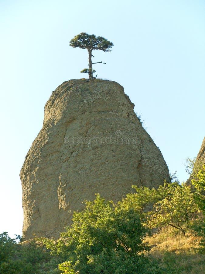 Eenzame boom royalty-vrije stock afbeelding
