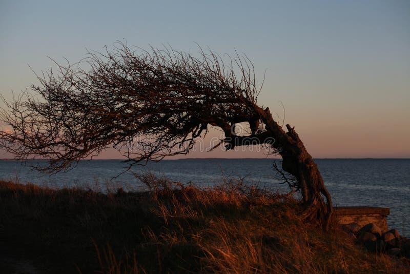 Eenzame boom bij de rand van het overzees royalty-vrije stock foto's