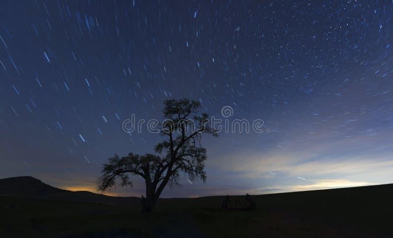 Eenzame boom bij nacht stock afbeelding