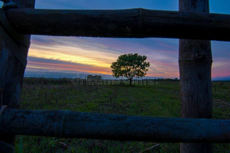 Eenzame boom bij zonsonderganglandschap royalty-vrije stock afbeeldingen