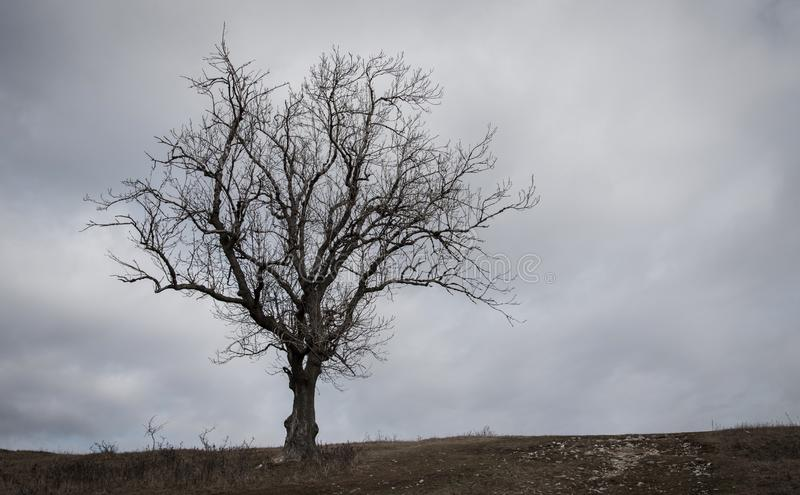 Eenzame boom in de aard stock fotografie