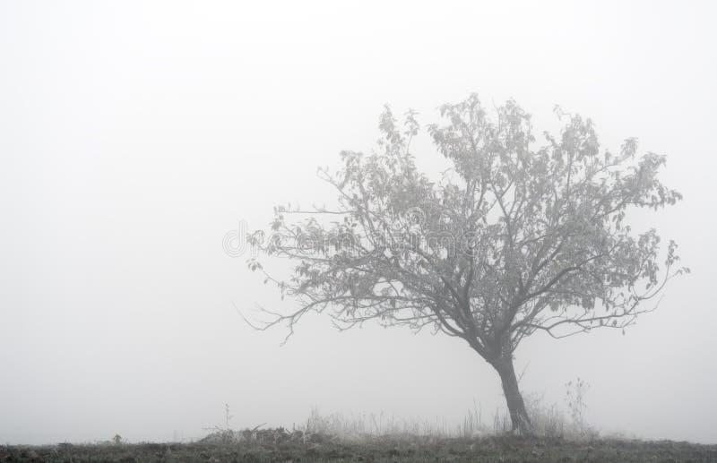 Eenzame boom in de mist stock foto's