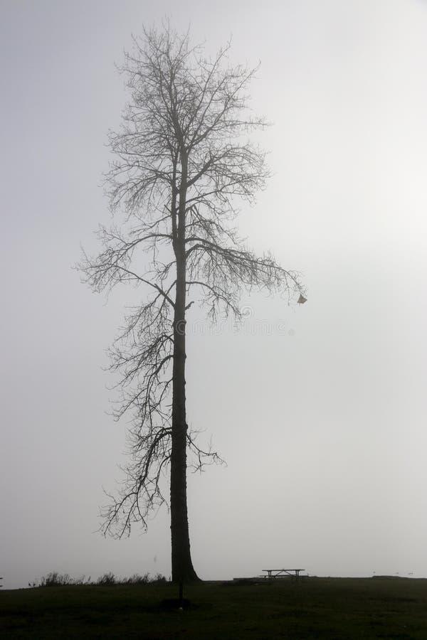 Eenzame boom in de mist stock fotografie