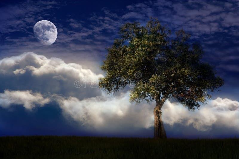 Eenzame boom in de nacht stock fotografie