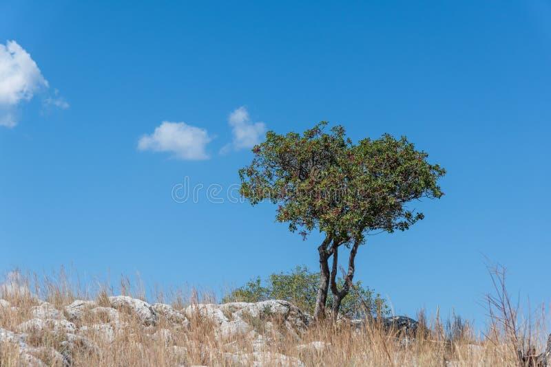 Eenzame Boom in de rotsen onder blauwe hemel royalty-vrije stock afbeelding