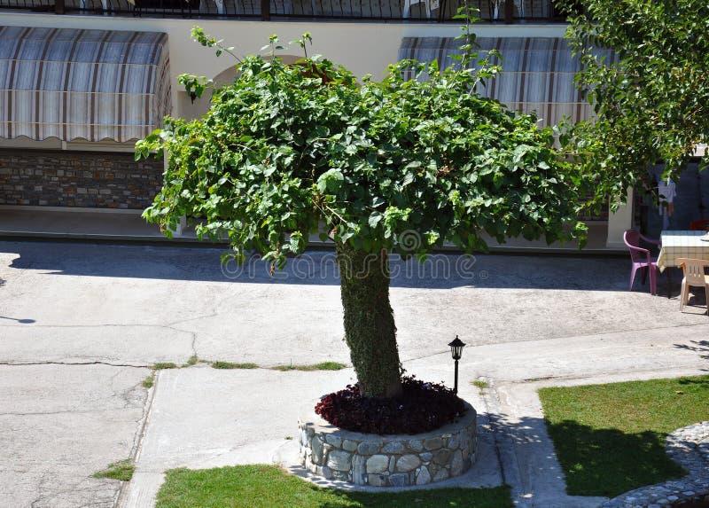 Eenzame boom in de tuin stock foto