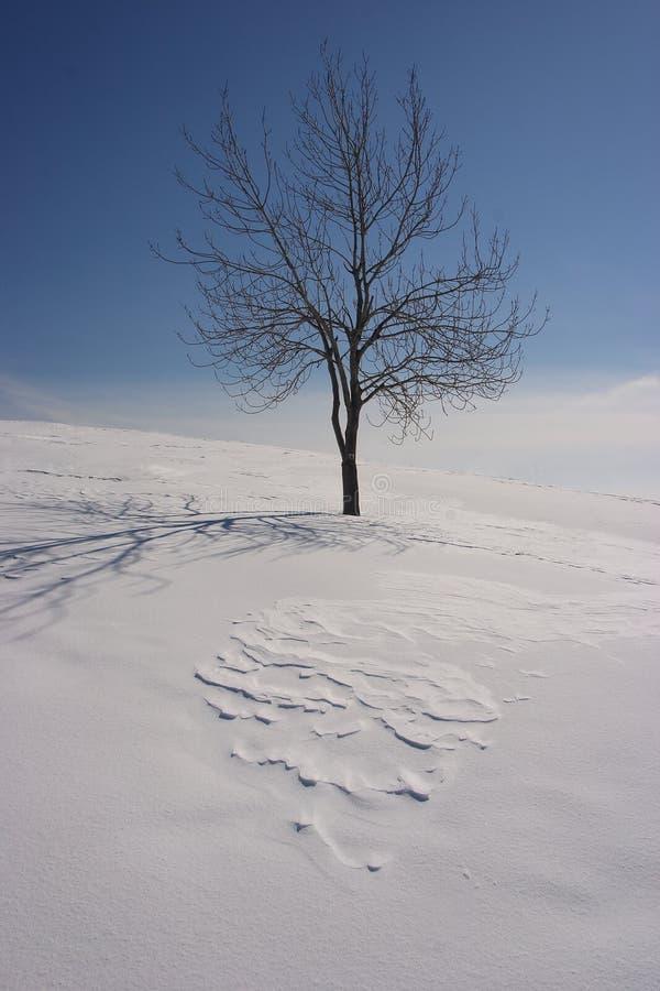 Eenzame boom in de winter royalty-vrije stock afbeeldingen