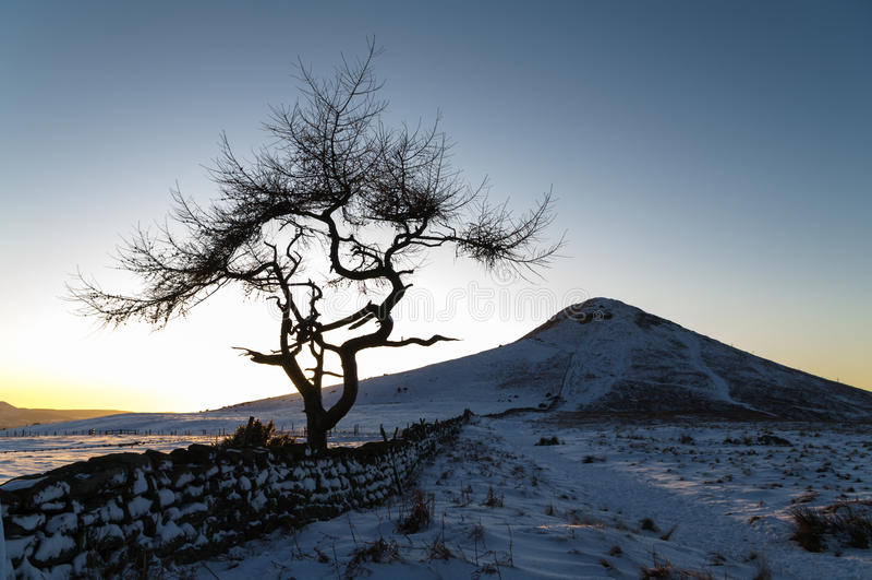 Eenzame Boom - de Winter stock foto