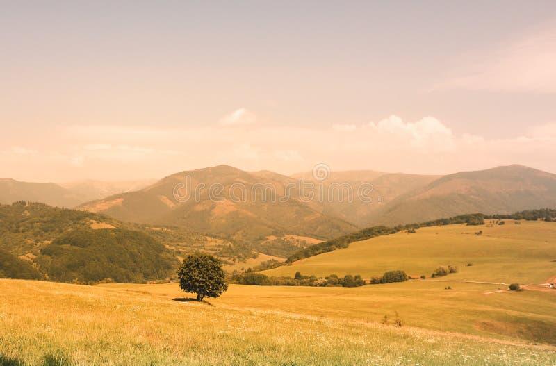 Eenzame boom die de bergen onder ogen zien royalty-vrije stock afbeelding