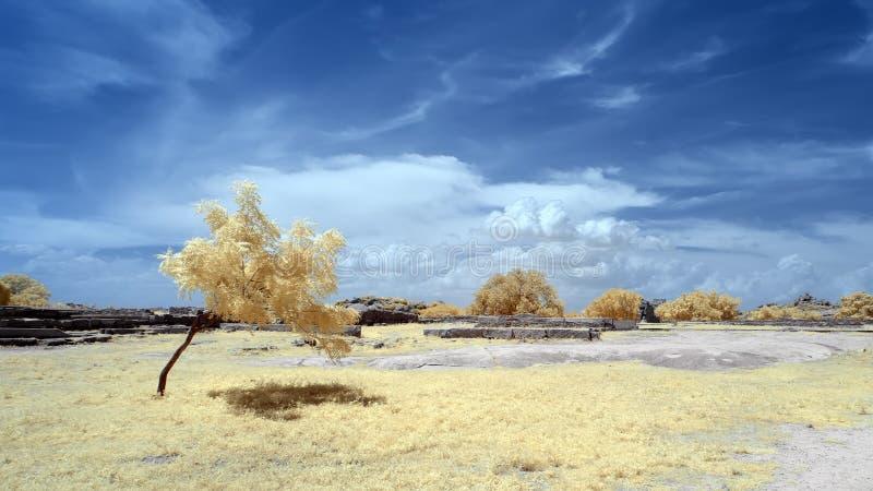 Eenzame boom die een schaduw op gras gieten onder een blauwe hemel stock afbeelding