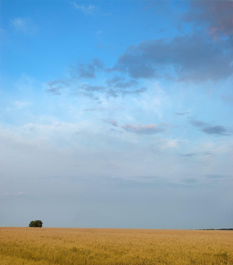 Eenzame boom. Een gebied. De hemel. stock foto's