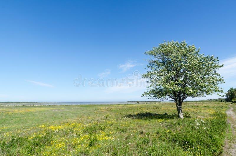 Eenzame boom in een mooie groene en heldere coastland door de lente royalty-vrije stock foto