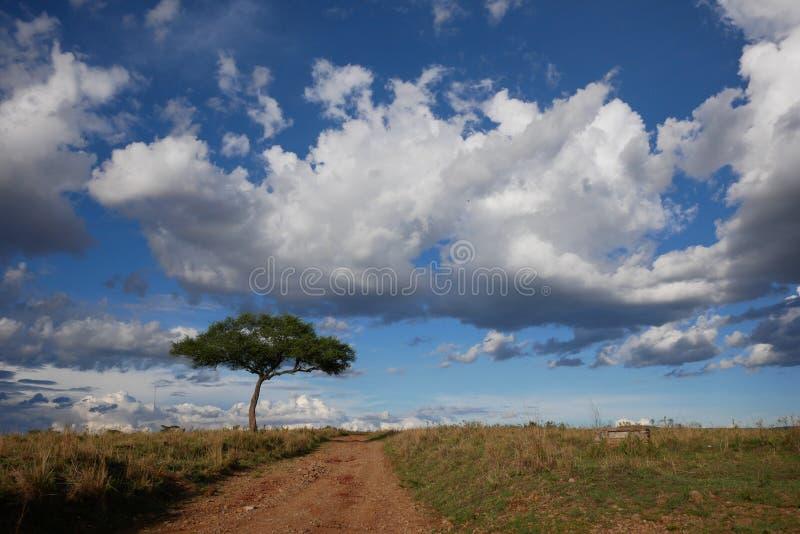 Eenzame boom en bewolkte hemel 2 royalty-vrije stock foto