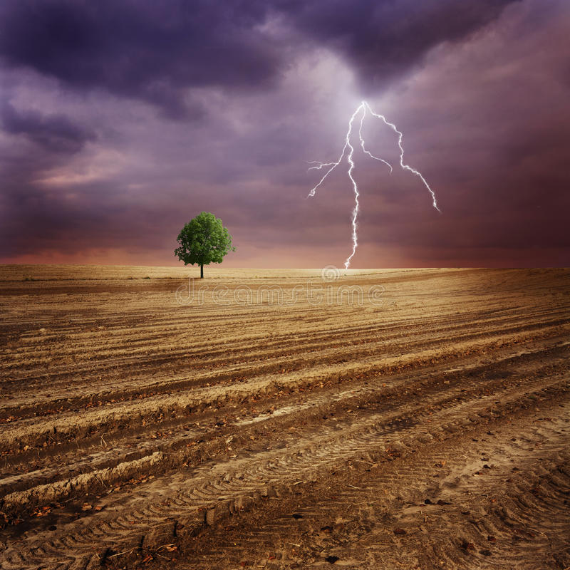 Eenzame boom en bliksem stock afbeelding