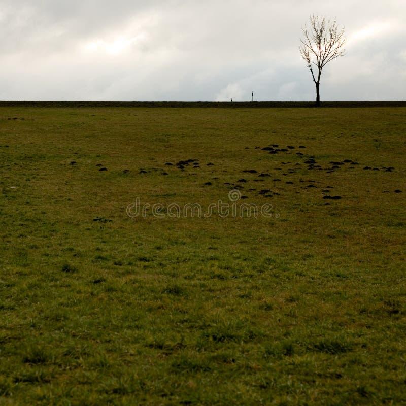 Download Eenzame Boom En Een Groen Gebied Stock Afbeelding - Afbeelding bestaande uit donker, landschap: 39101003