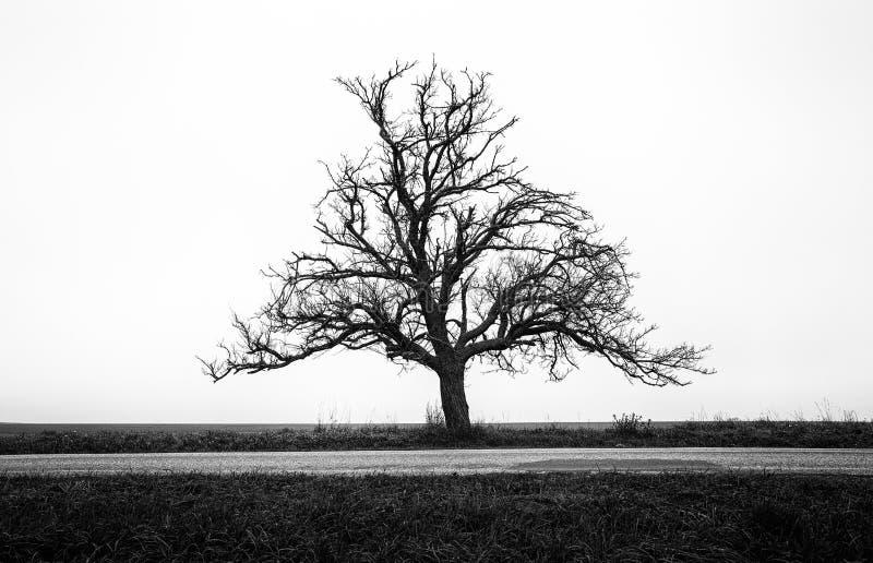 Eenzame boom en lege weg royalty-vrije stock afbeeldingen
