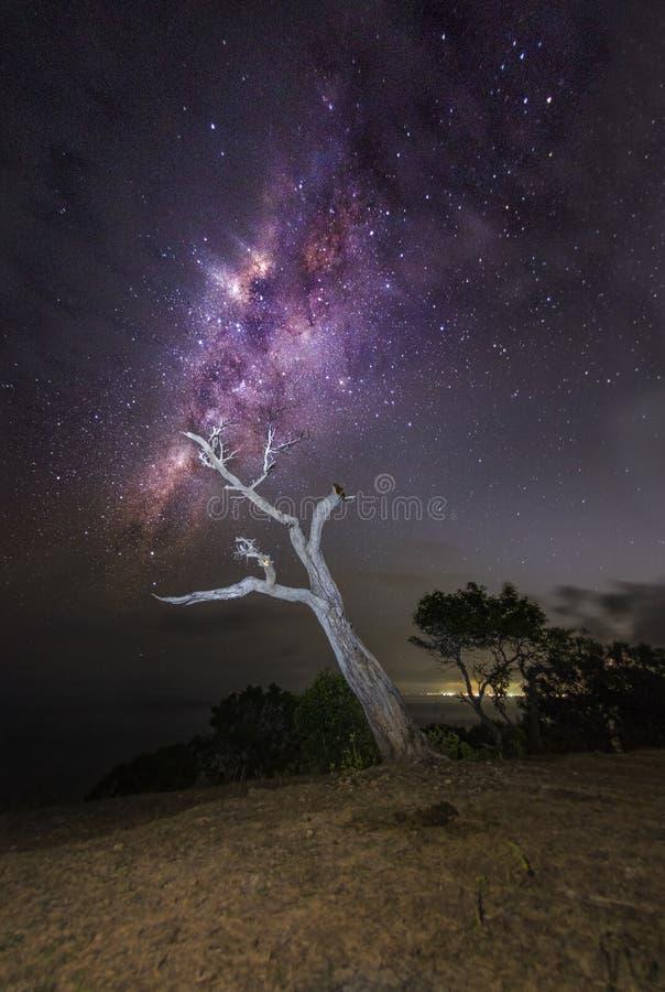 Eenzame boom en milkyway bij nacht royalty-vrije stock fotografie
