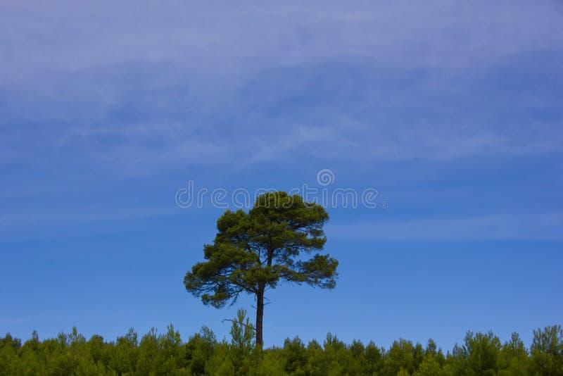 Eenzame boom in het bos, Europa, Frankrijk royalty-vrije stock fotografie