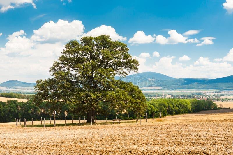 Eenzame boom in het midden van het gebied royalty-vrije stock afbeelding