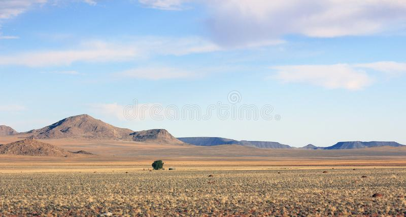 Eenzame boom in het midden van nergens stock fotografie