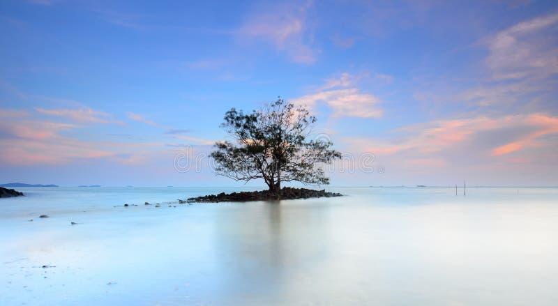 Eenzame boom in het midden van overzees tijdens zonsondergang stock foto