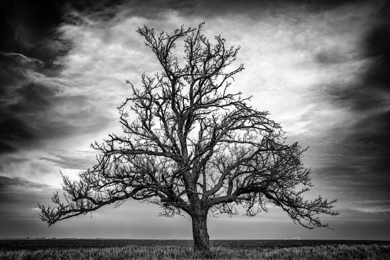 Eenzame boom in land stock afbeeldingen