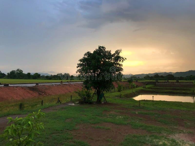 Eenzame boom met de dageraad royalty-vrije stock afbeeldingen