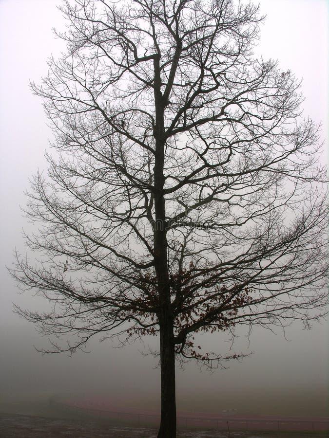 Eenzame boom in mist royalty-vrije stock afbeeldingen