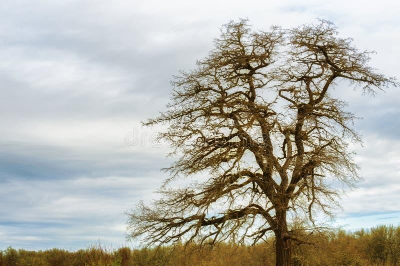Eenzame boom onder bewolkte hemel royalty-vrije stock afbeelding