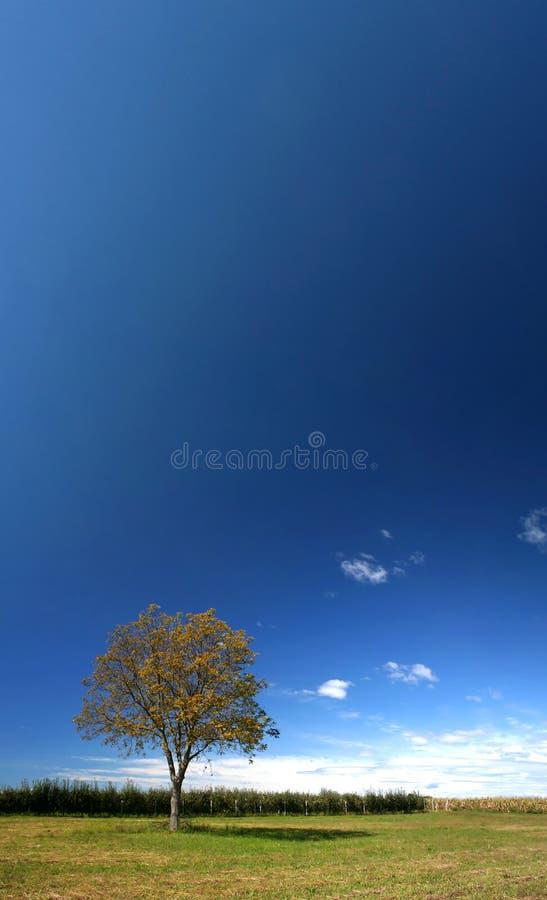 Eenzame boom onder blauwe hemel stock afbeelding