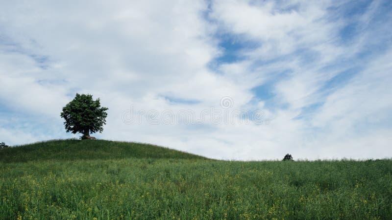 Eenzame boom onder een blauwe hemel royalty-vrije stock foto