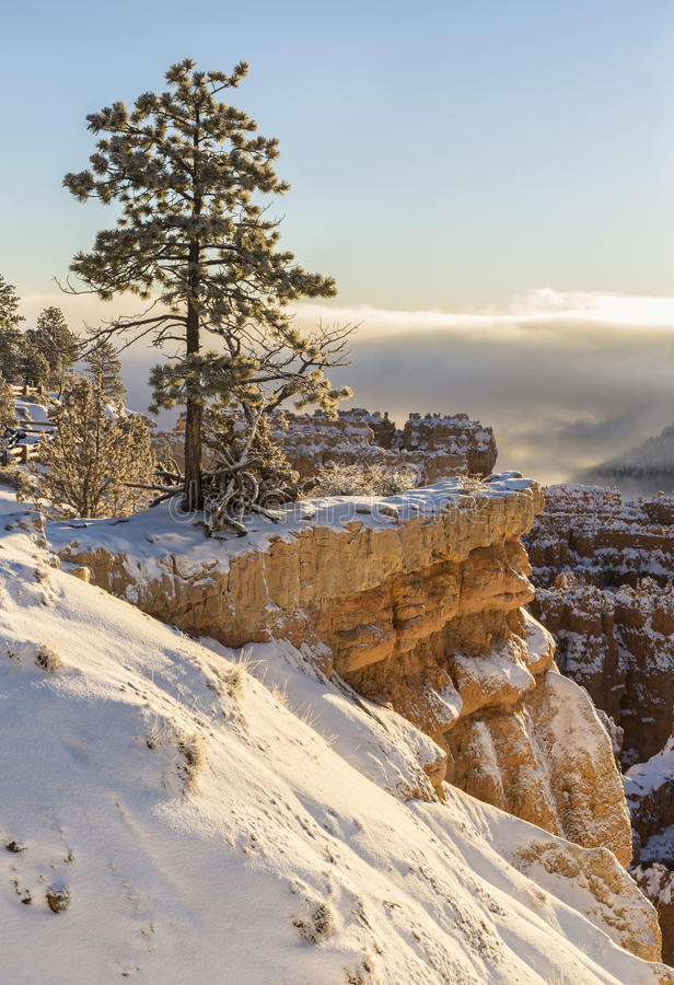 Eenzame Boom op Bryce Canyon Rim stock fotografie