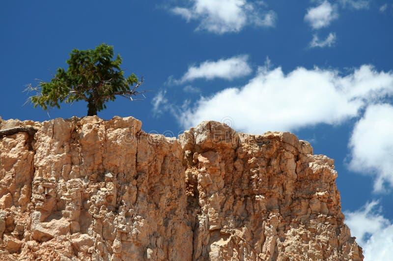 Eenzame Boom op de Bovenkant van de Berg royalty-vrije stock fotografie