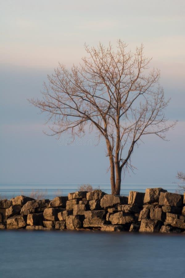 Eenzame Boom op de Golfbreker bij Havenkrediet royalty-vrije stock fotografie