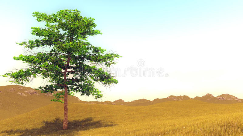 Eenzame boom op de heuvel royalty-vrije stock afbeeldingen