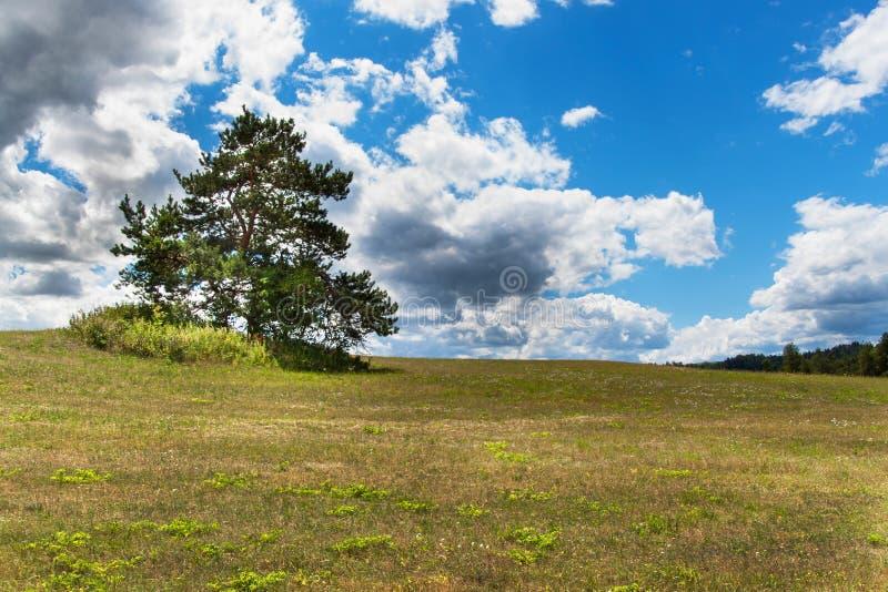 Eenzame boom op de horizon Droog weiland Kleine pijnboomboom op blauwe hemel met wolken royalty-vrije stock foto