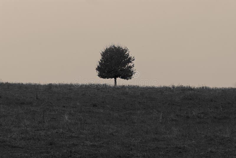 Eenzame boom op de horizon op het gebied royalty-vrije stock foto