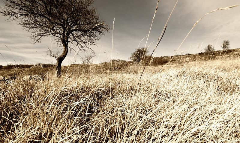 Eenzame Boom op de Tarwegebied van de Bergbraakakker stock foto