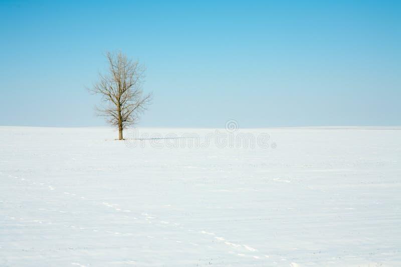 Eenzame boom op de wintergebied stock foto