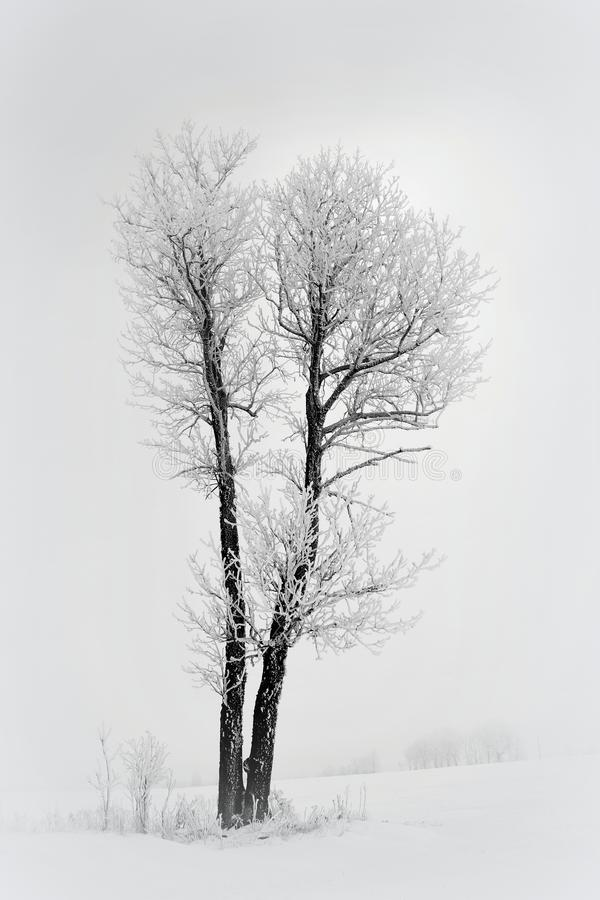 Eenzame boom op een gebied Het landschap van Litouwen royalty-vrije stock foto