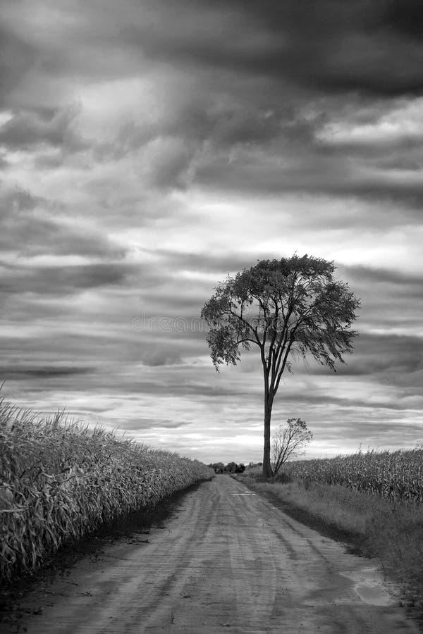 Eenzame boom op een graangebied royalty-vrije stock fotografie